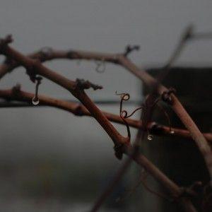 THe-Vine-Background-1