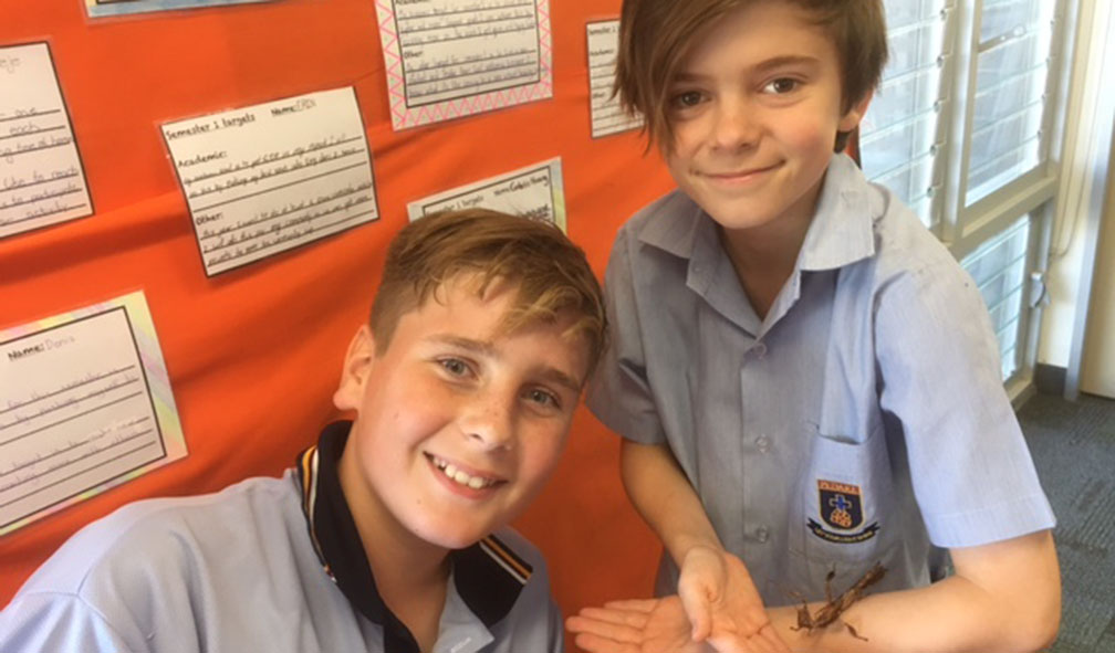 Year 7 Science 1