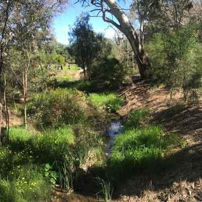 Year-3-Cobbler-Creek-3