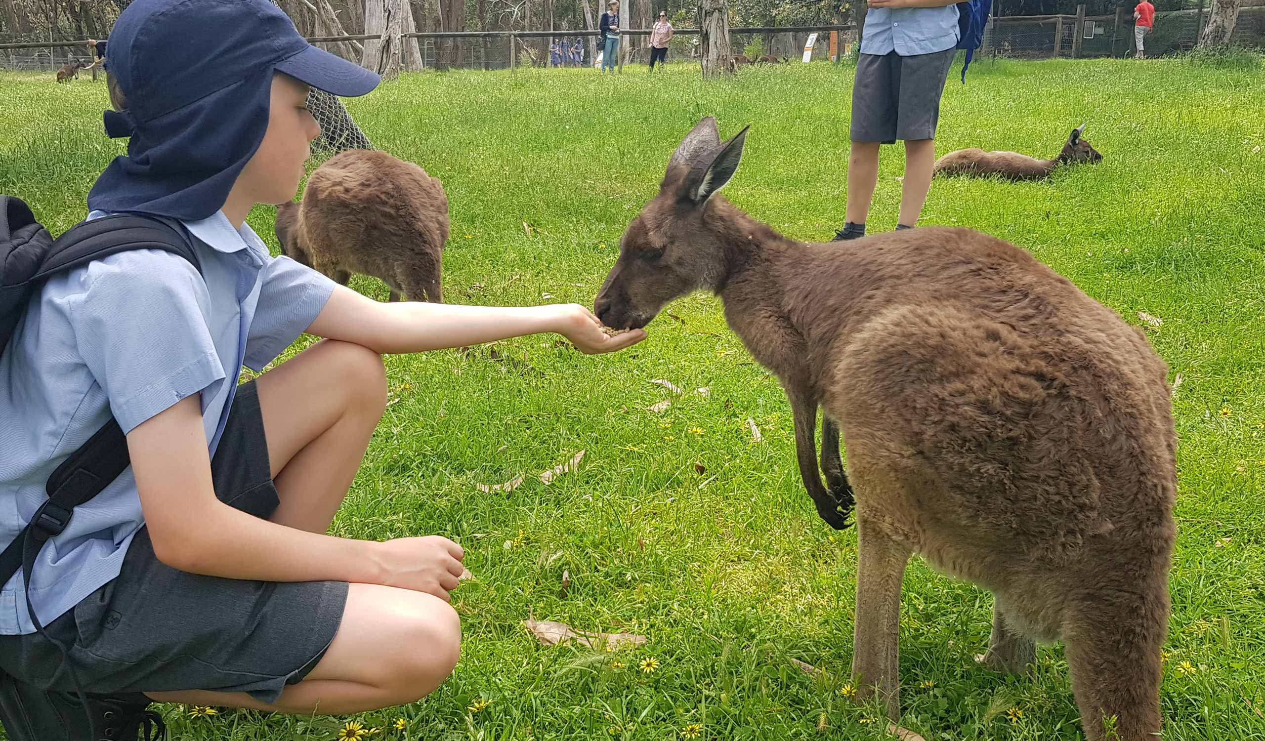 Year-5-Cleland-Wildlife-Park-2